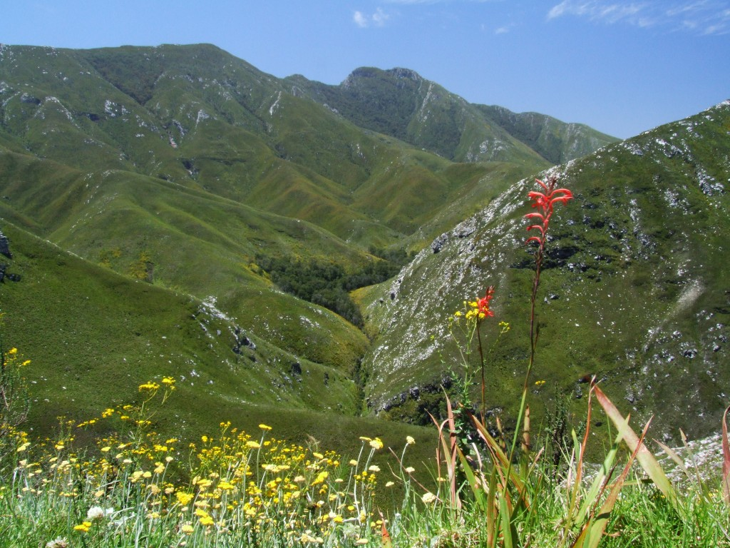 Outeniqua Mountains, South Africa
