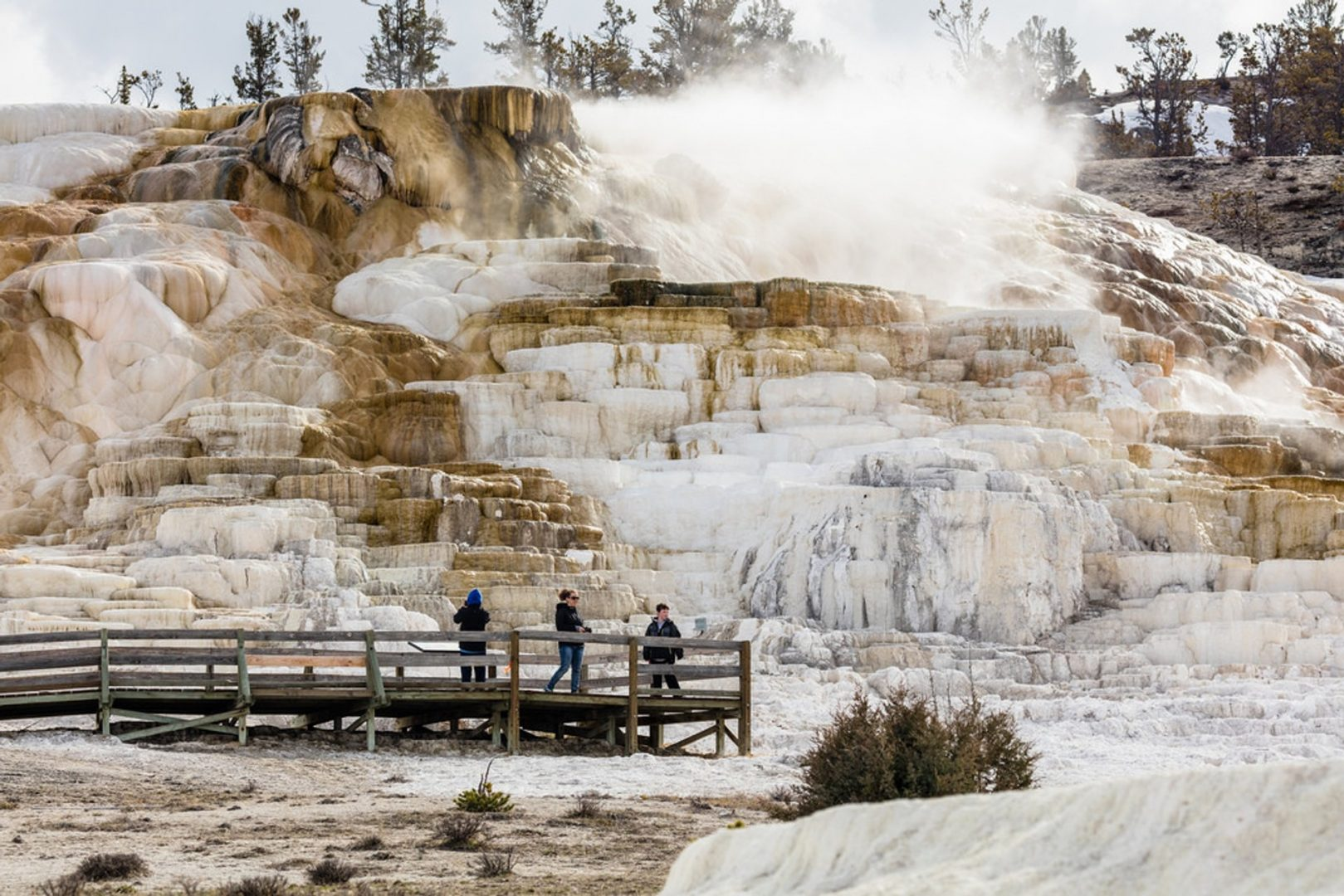 Mammoth Hot Springs, Yellowstone, U.S.A.