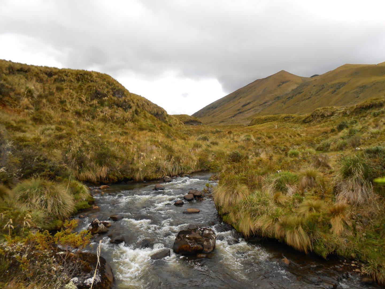 Llanganates National Park, Ecuador