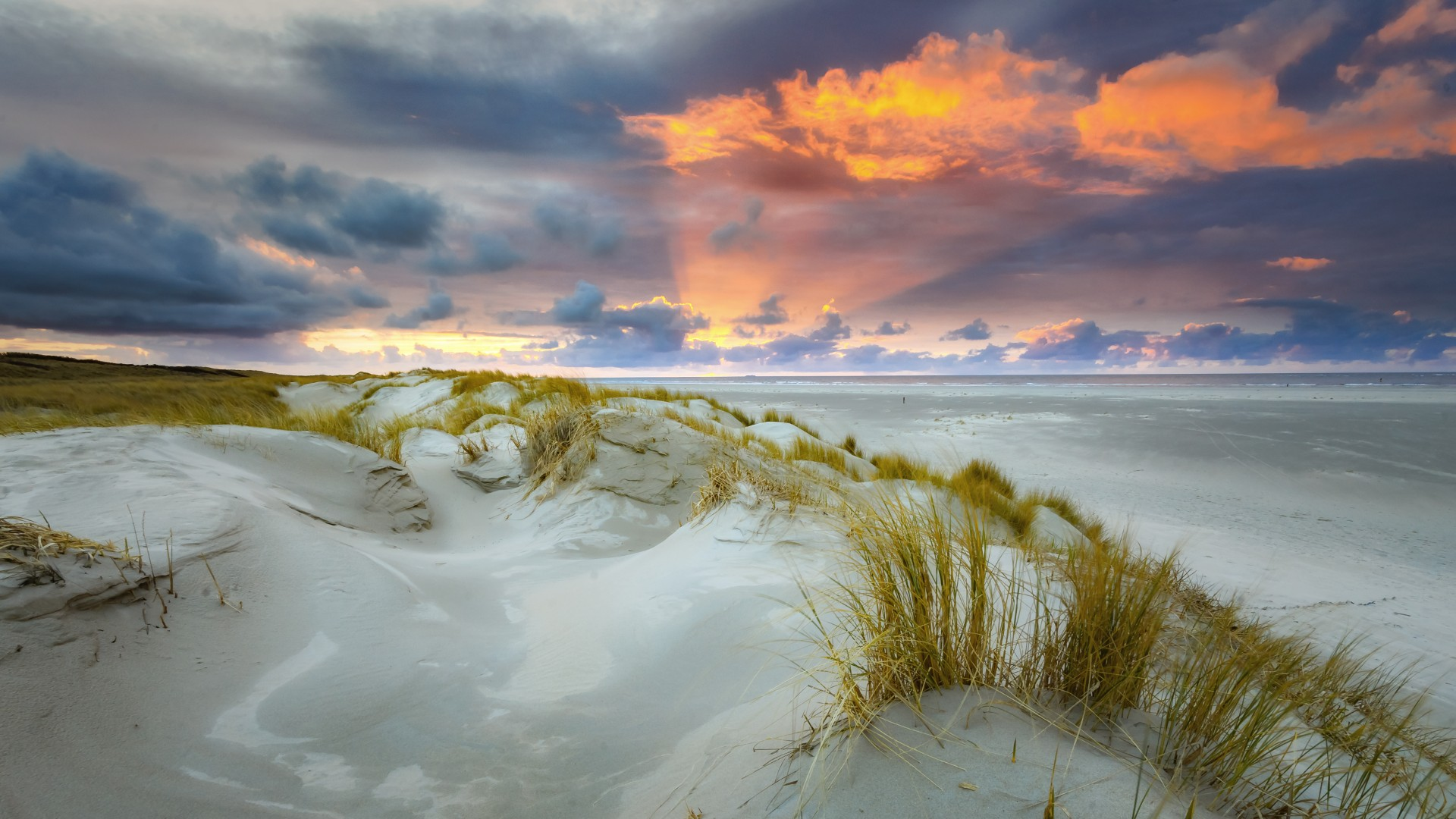 Dunes of Texel National Park, Texel, The Netherlands