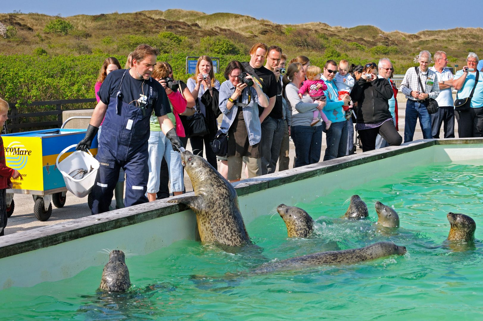 Ecomare Seal Rescue, Texel, The Netherlands