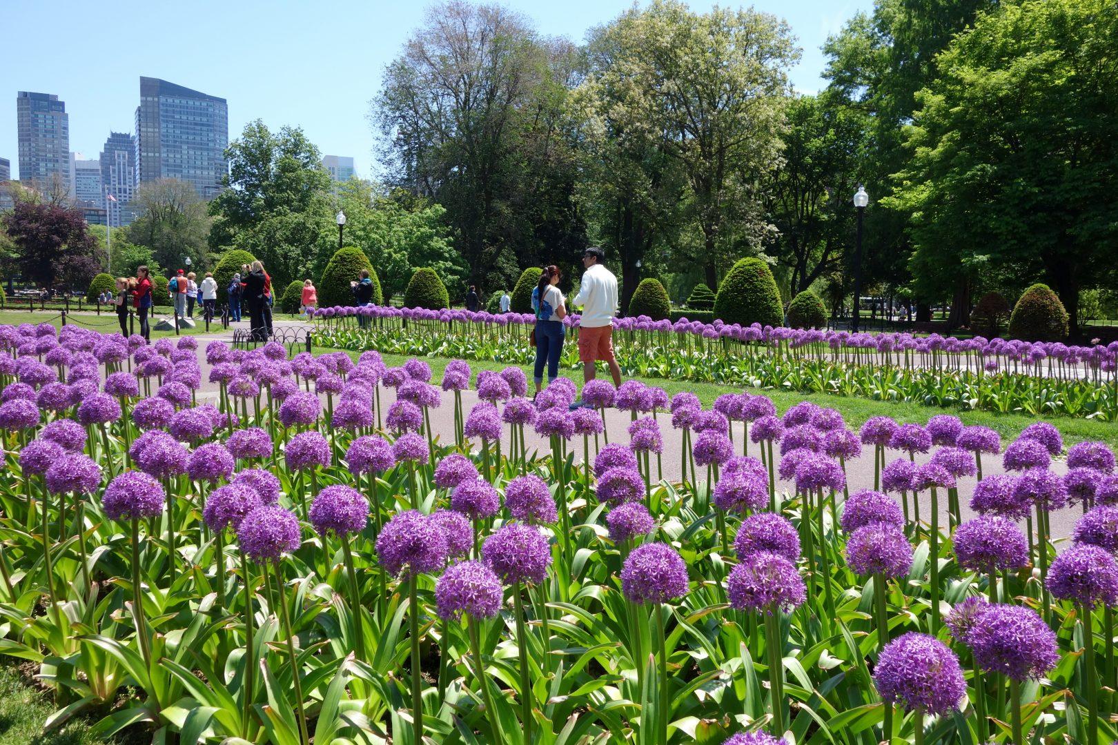 Boston Public Garden, Boston